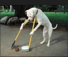 Hond ruimte op